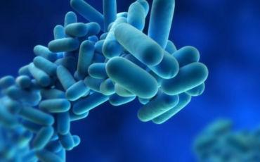 desinfeccion patogenos barcelona