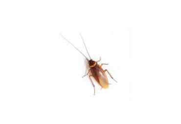 Control de cucarachas en maresme